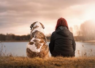 Hunde willkommen: Startschuss zur Pfoten-Klassifizierung